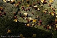 紅葉の思い出 - Mark.M.Watanabeの熊本撮影紀行