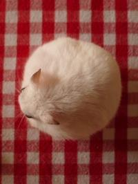 テーブルにポツンとお餅 (Criceto) - エミリアからの便り