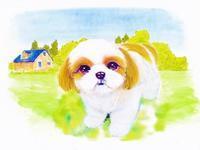 『大谷田公園の梅園』 - スローな生活