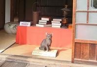 夏目漱石が「吾輩は猫である」を書いた家 - 緑区周辺そぞろ歩き