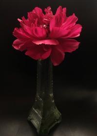 声 - 花の窓