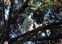 オオタカ公園 - 写真で綴る野鳥ごよみ