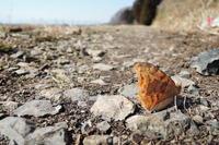 早い目覚め - 蝶の縁