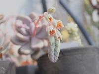 花茎を伸ばす頃 - 静かに過ごす部屋