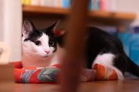 ホイちゃんの写真いろいろ&パパ部屋大掃除の話 - 猫と夕焼け