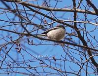 鳥追い人は続く☆木曜&金曜 - じゅうべえな日々♪  「ファインダー越しにsmile☆」