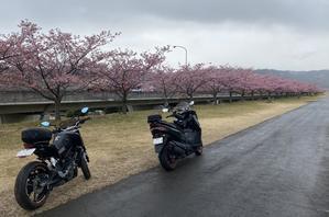 ★ 城山さくらツーリング(バーグマン400、DUKE200) - ビッグスクーターに乗る60代のじ~じ