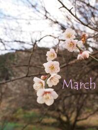 3月のお休み - 愛媛県新居浜市  from KotoRi