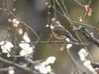 今日の鳥さん - 野鳥Photo(不定期更新)