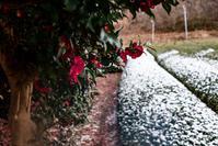 雪の茶畑 - toshi の ならはまほろば