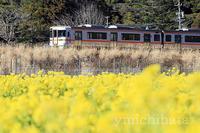 菜の花と列車 - みちはた写真館フォトギャラリー