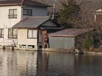 2月27日(土) 上野池のスパイダーマン - 庄原市上野公園(上野池)とその周辺の出来事