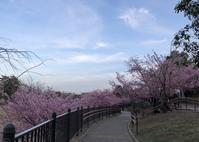 桜と椿 - rhizome2-地下茎-