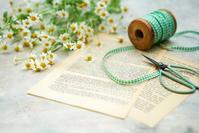 マトリカリアの花言葉は「集う喜び」 - きれいの瞬間~写真で伝えるstory~