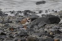 河口(2021年2月28日) - ほとんど野鳥写真日記