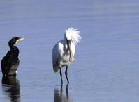 MFの沼へヘラサギに逢いに - 私の鳥撮り散歩