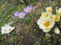 クロッカスとギリシャ神話 - 花の自由旋律