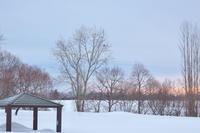 オジロワシこの瞬間の為に毎朝雪の河原に通っています2021/02/28 - 今朝の一枚 石狩川の朝