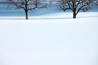 2月の雪#1 - 但馬・写真日和