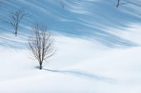 2月の雪#2 - 但馬・写真日和