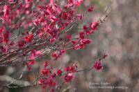 山里の春 - 風の彩りー3