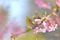 春の匂い - お花びより