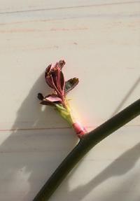 Garden Story(ガーデンストーリー)さんにて「実録!バラがメインの庭づくり第14話」がアップ頂きました。 - バラとハーブのある暮らし Salon de Roses