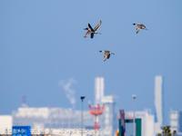 写真日記・多摩川探訪記-その151・2021.2.28-② - ココカメラ【であいの・き】