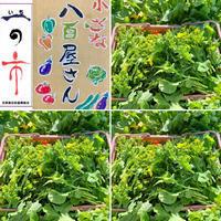 春をお届け❣️ - かぐやの! TMO吉原 勝手に応援団!!。。。