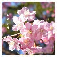令和3年弥生のついたち1人桜見優しい色にうっとり2021/3/1 Tokyo - むっちゃんの花鳥風月  ( 鳥・猫・花・空・山 )