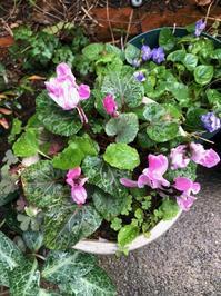 春支度 - 花の窓