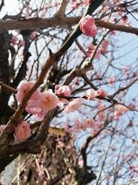 今日から3月・・・。 - ママうさぎDiary(ちょっとだけ楽しい暮らし)
