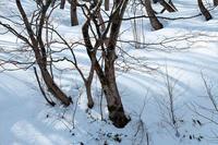 2月の雪#4 - 但馬・写真日和