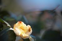 美しき花 - 節操のない写真館