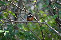 ちょっと休憩して野鳥 - peanut daily 3