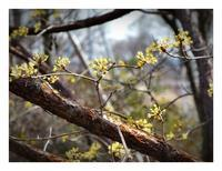 3月始まりの黄色 - あおいそら
