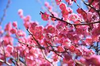 梅が咲く公園へ - 季節の風を追いかけて