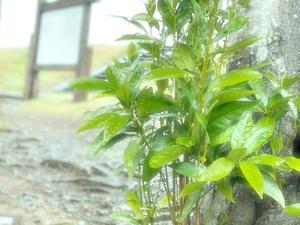 ?おはようございます?( ??? )?.*☆ - 狩野川スタッフブログ