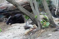 シンリンオオカミ&アメリカクロクマ - なんでもブログ2