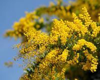 春の花々とウメジロー - 星の小父さまフォトつづり