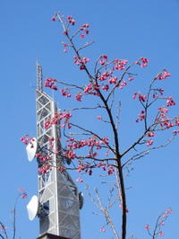 2021-03-02 春の花その1 - 思い立ったが吉日