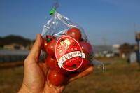 ぶどうトマト「2021」の販売を一旦停止します。 - 奥田トマト農園通信 (ロング版)