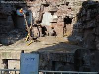 2021年2月天王寺動物園その2レッドパンダおやつタイム - ハープの徒然草