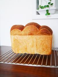 食パンとホットサンド! - This is delicious !!