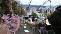 藤田八束の春を探しに出かけましょう、春は元気にしてくれる、野山に花が咲き川には魚たち小鳥たちが集う、庭にも花が咲き始めました・・・愛媛県松山市を訪ねて - 藤田八束の日記