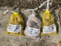 ジャガイモの植え付け - おうちやさい