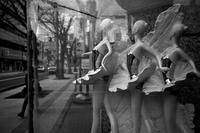 欅通りのバレリーナたち20210303 - Yoshi-A の写真の楽しみ