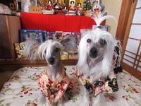 令和3年3月3日 - 毎日笑顔♪ 裸犬☆温・真珠・絆愛Ⅱ
