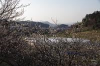 明日香村小原 - ぶらり記録 2:奈良・大阪・・・