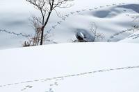 2月の雪Final - 但馬・写真日和